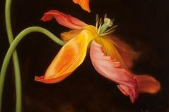 © Kerri Weller, Parrot Tulips